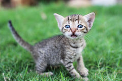 Il gatto sveglio fotografia stock