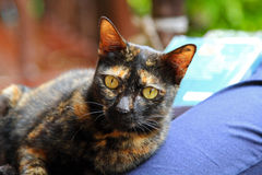 Il gatto sveglio che cercano qualcosa ed i suoi occhi sono gialli Immagini Stock