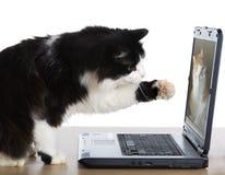 Il gatto tira una zampa verso il computer portatile fotografia stock