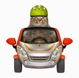 Il gatto in un casco conduce una piccola automobile immagini stock libere da diritti