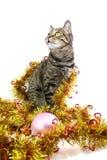 Il gatto in un sembrare della canutiglia lasciato fotografia stock libera da diritti