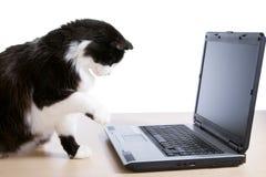 Il gatto utilizza un computer portatile Immagini Stock Libere da Diritti
