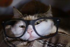 Il gatto in vetri si chiude sulla foto divertente Fotografia Stock Libera da Diritti