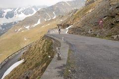 Il Gavia di Passo, 2621m, è un passaggio di alta montagna nelle alpi italiane Immagini Stock Libere da Diritti