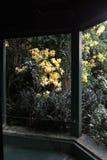Il gazebo con giallo lascia nell'autunno in Wicklow Irlanda Fotografia Stock Libera da Diritti