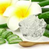 Il gel puro di Vera dell'aloe su aloe vera va e fondo di plumeria Immagine Stock