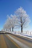 Il gelo del Hoar ha coperto gli alberi accanto ad una strada rurale Fotografie Stock