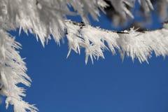 Il gelo ha coperto i ramoscelli Immagini Stock Libere da Diritti