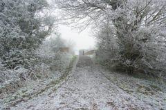 Il gelo ha coperto il sentiero per pedoni Fotografia Stock