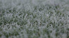 Il gelo ha coperto l'erba Fotografia Stock Libera da Diritti
