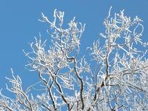 Il gelo ha riguardato i rami di albero Fotografie Stock Libere da Diritti