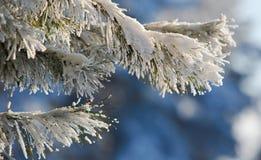 Il gelo sui rami fotografie stock libere da diritti