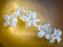 Il gelsomino fiorisce il foat sulla ciotola dorata Fotografia Stock