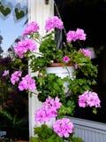 Il geranio fiorisce in canestro d'attaccatura su un balcone Immagine Stock