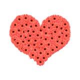 Il Gerbera fiorisce il cuore Immagini Stock