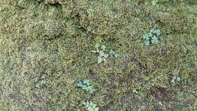 Il germoglio che cresce nei precedenti dei licheni immagini stock libere da diritti