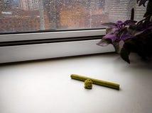 Il germoglio della marijuana e un Cigarillo fresco sulla finestra abbaiano con pioggia Immagine Stock Libera da Diritti