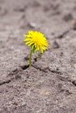 Il germoglio si fa strada attraverso la sabbia Fotografia Stock