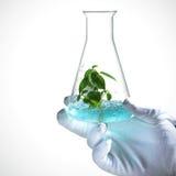 Il germoglio si sviluppa in vetro del laboratorio Fotografia Stock Libera da Diritti