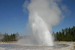 Il geyser della margherita erompe Fotografie Stock Libere da Diritti