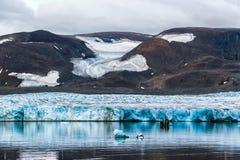 Il ghiacciaio il Serp-i-Molot in una baia riguarda Novaya Zemlya Immagine Stock Libera da Diritti