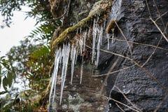 Il ghiaccio congelato cade nella foresta dell'inverno in alta montagna in Sapa, Vietnam Fotografia Stock