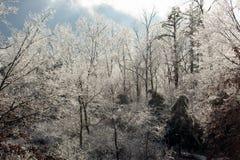 Il ghiaccio ha coperto gli alberi fotografie stock