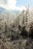 Il ghiaccio ha coperto gli alberi immagini stock libere da diritti