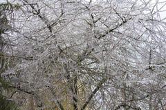 Il ghiaccio ha coperto l'albero Fotografia Stock