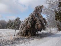 Il ghiaccio ha coperto l'albero immagini stock