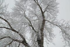 Il ghiaccio ha coperto l'albero immagine stock libera da diritti