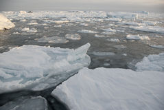 Il ghiaccio intorno alle isole antartiche Fotografia Stock Libera da Diritti