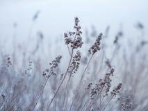 Il ghiaccio sulla riva del lago pianta una mattina fredda dell'inverno fotografie stock libere da diritti