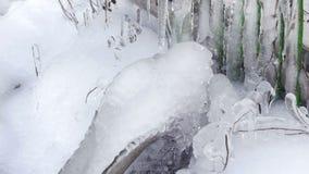 Il ghiacciolo su un albero, ghiaccio si decompone, l'inverno stock footage