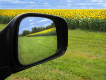 Il giacimento del girasole ha riflesso in specchio di automobile laterale Fotografia Stock