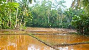 Il giacimento del riso archivi video