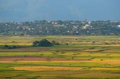 Il giacimento del riso Fotografia Stock Libera da Diritti