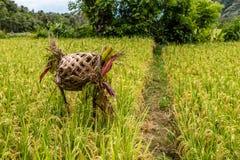 Il giacimento del riso con la canna ha ricoperto di paglia l'altare per le offerti, l'isola di Bali, Indonesia Fotografia Stock