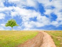 Il giacimento del riso dopo il raccolto con l'albero ed il cielo blu wallpaper Fotografie Stock