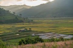 Il giacimento del riso ed il tramonto Fotografia Stock Libera da Diritti