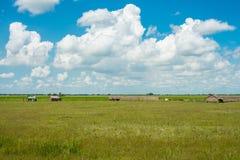 Il giacimento del riso nella campagna del Myanmar Fotografia Stock