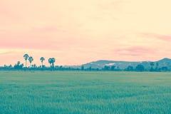 Il giacimento del riso nella stagione delle pioggie ed il fondo della montagna appannano Retr immagini stock