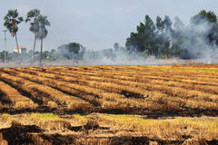 Il giacimento del riso sta bruciando per preparare il terreno Fotografie Stock
