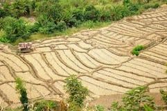 Il giacimento del riso, Tailandia Fotografie Stock Libere da Diritti