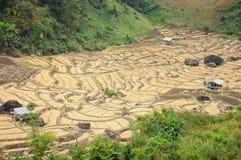 Il giacimento del riso, Tailandia Fotografia Stock Libera da Diritti