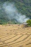 Il giacimento del riso, Tailandia Fotografia Stock