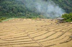 Il giacimento del riso, Tailandia Immagini Stock