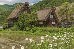 Il giacimento del riso in villaggio storico di Shirakawa-va, il Giappone Fotografia Stock