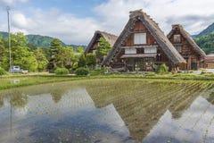 Il giacimento del riso in villaggio storico di Shirakawa-va, il Giappone Immagini Stock Libere da Diritti