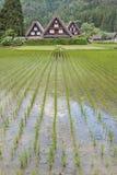 Il giacimento del riso in villaggio storico di Shirakawa-va, il Giappone Fotografie Stock